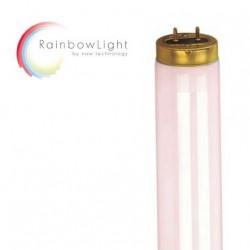 MegaSun Rainbow DeLuxe 26x Rainbow Light 180W 2m, W 20x Rainbow Light 180W 1,9m 30x Booster (cara & escote)